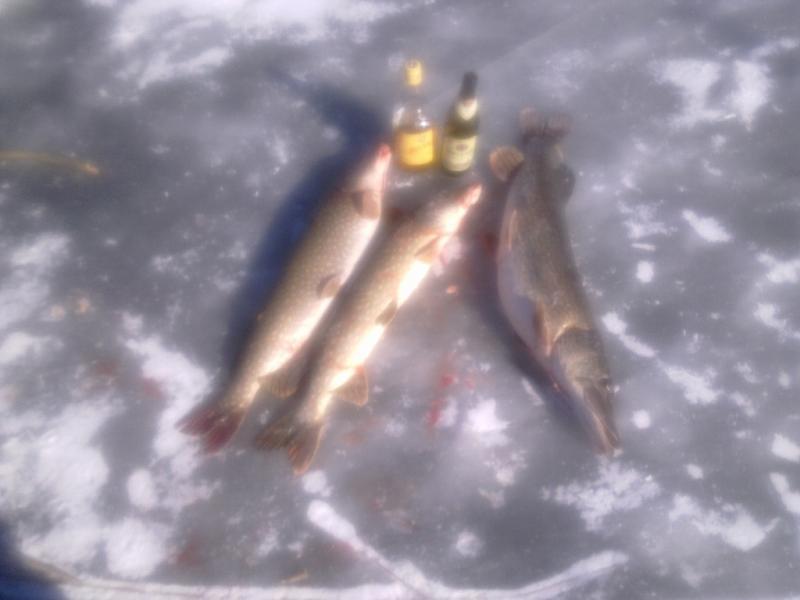 Февраль 2011, Камызякские дела